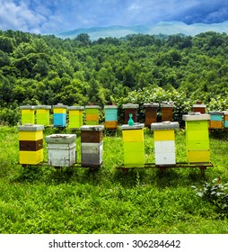Bee hives on meadow in countryside of Montenegro.