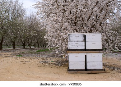 Bee hives for pollination in almond orchard, Central Valley, California