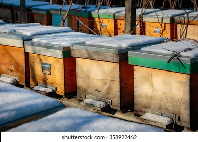 Bee hives in the winter covered with snow in a garden