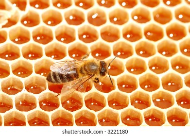 bee and honey cells  extreme close up