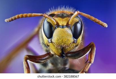 bee, honey, macro, wild, bite, insects, nature