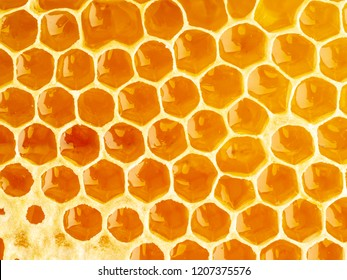 bee honeycomb closeup, fresh stringy dripping sweet honey, macro background.