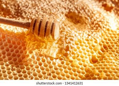 Bee honeycomb and honey close up. Wooden honey stick with liquid honey.