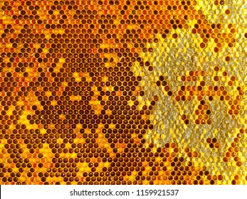 bee honeycombs.The structure of a honeycomb filled with honey