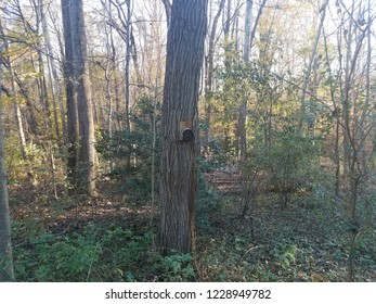 bee house with holes on tree in the forest