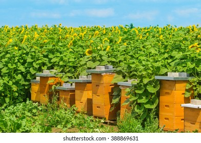 Bee houses at the sunflower field