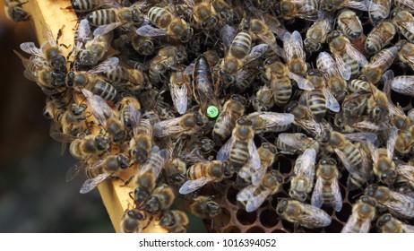 Bee kings in their people