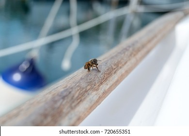 bee leaning against a sailboat in harbor