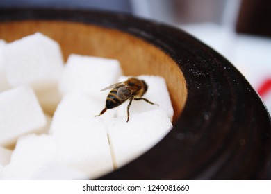 Bee loving suger