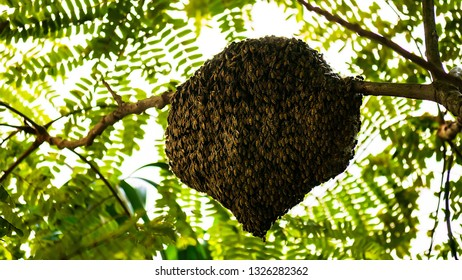 Bee makes a nest on a branch.