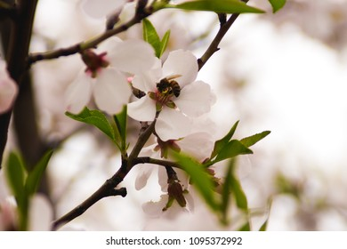 Bee...who is never  tired of hard work