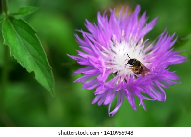 bee on a beautiful flower on a blurred background