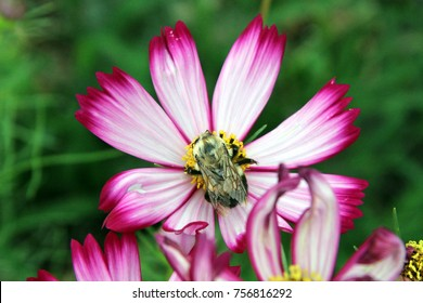 Bee on beautiful flower, Closeup