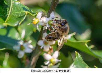 a bee on a bush pollinates flowers