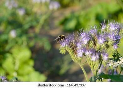 bee on flower - Shutterstock ID 1148437337
