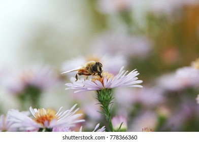 Bee on a flower.