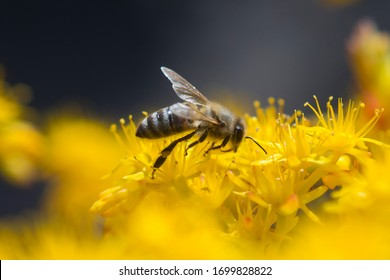 Bee on flower- Close Up