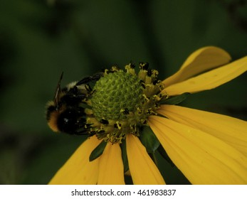 Bee on flower close-up. Selective focus