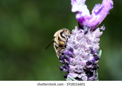 Bee on flower collecting pollen