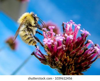 A bee is on a flower during summer.