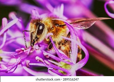 Bee on the Flower in the garden in summer