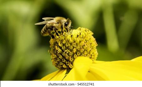 bee on flower macro