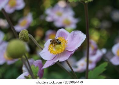 Bee on flower, San Francisco Botanical Garden