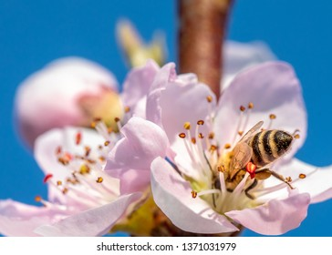 Bee on the flower at sunny day