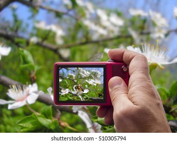 Bee on flower on tree branch in camera viewfinder
