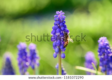 Bee On Flowers Spring Stock Photo Edit Now 1181072290 Shutterstock