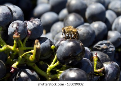 Bee on a grape