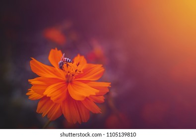 The bee on orange  flower and sunlight. Dark vintage style