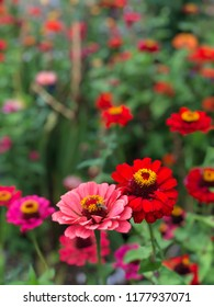 A bee on a red flower on garden in spring