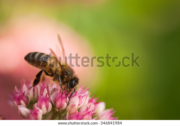 Bee on some flowers