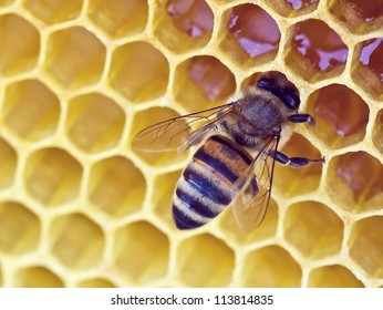 Bee on a wax background