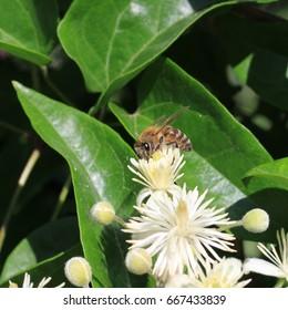 bee on work