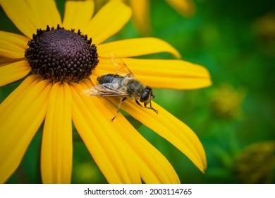 Biene auf gelbem Boden