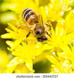 Bee on yellow flower by summer day
