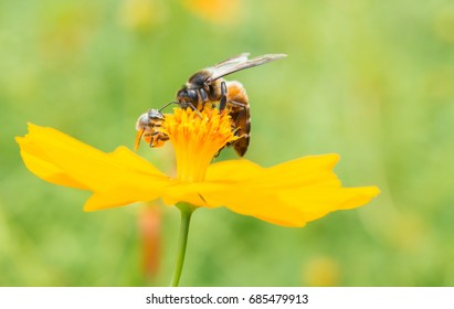 bee on the yellow flower in garden.