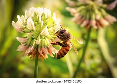 bee and plants symbiotic relationship