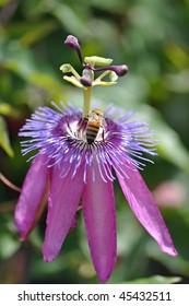 a bee pollinates on a beautiful purple flower