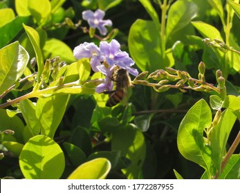 Bee is pollinating a tropical flower