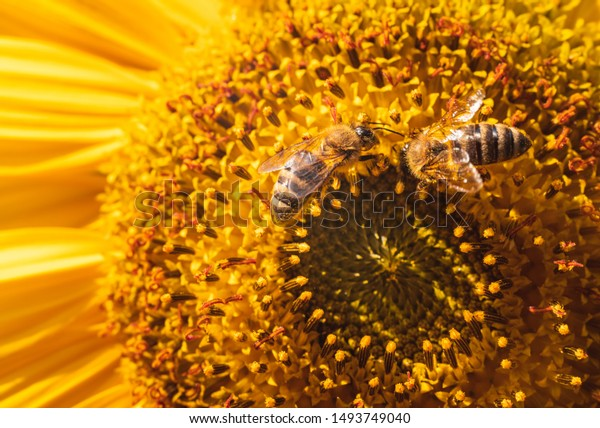 Bee pollinator garden flower honey nature