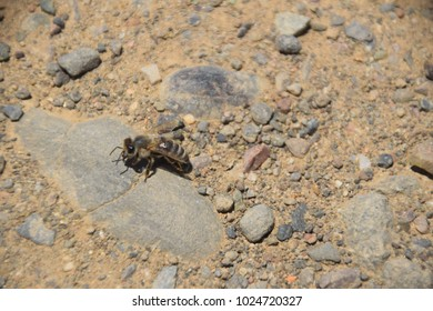 A bee seen in the countryside in Marin County, California