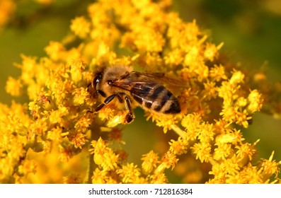 Bee sits on yellow flower on sunny summer day