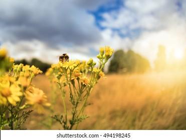 Bee sitting on flower in sunny field