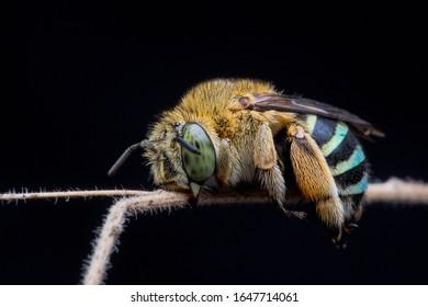 bee sleeping tight at cool night