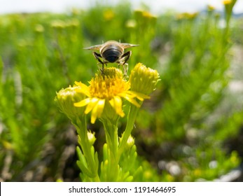a bee stood on a flower on a sunny summer day