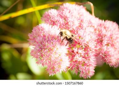 Bee in summer sun collecting honey