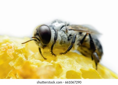 bee takes care of honeycomb